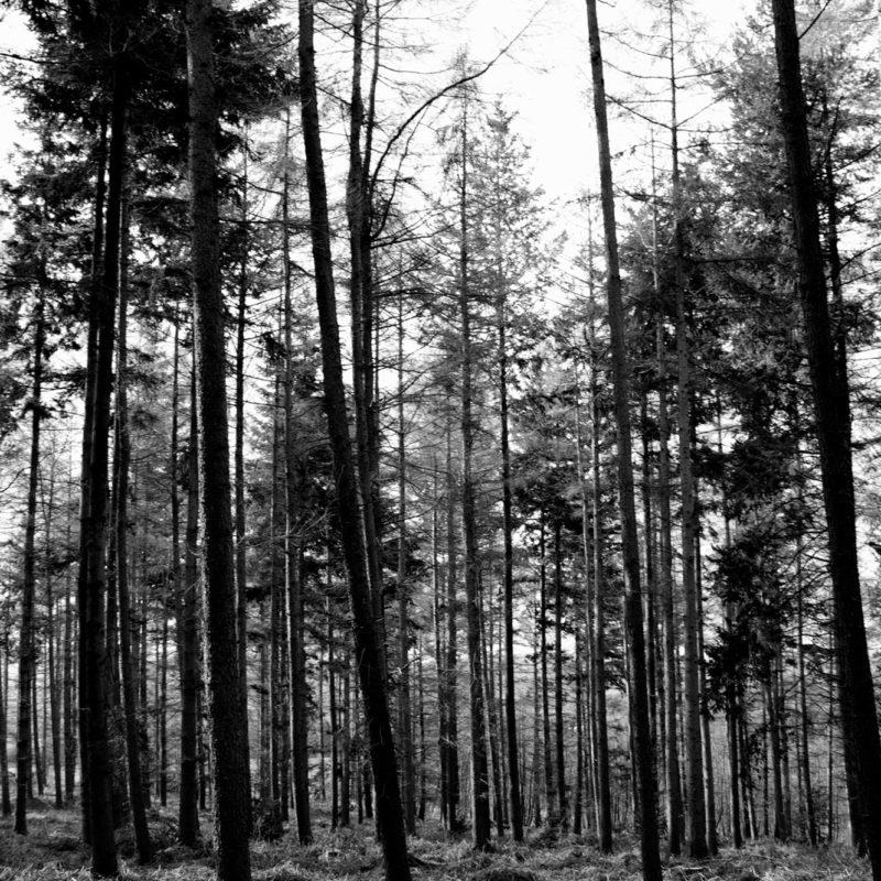 Forrest Black & White